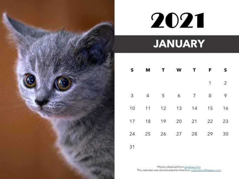 printable kitten calendar 2021